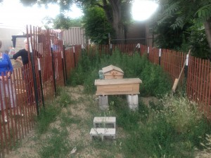Lakewood residents are worried about make-shift beehives in their neighbor's backyards. [Photos by Laurence Washington]