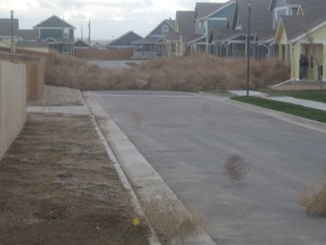 As gusty winds blow, many Coloradans find themselves shoveling tumbleweeds.