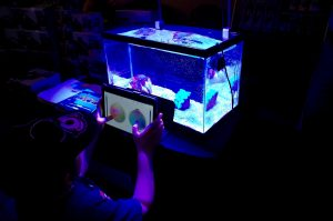 Using a remote control via app to change the color and intensity of aquarium lighting. [Photo: Duane Hirschfeld]